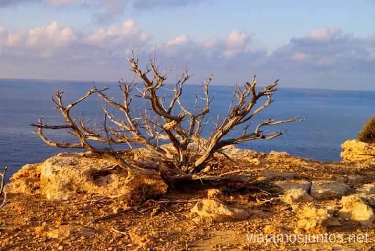 Paisaje surrealista de Ibiza Rutas de senderismo fáciles por la isla de Ibiza. Invierno o verano. Playa, montaña y calas secretas