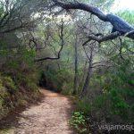 Empezamos por el bosque Rutas de senderismo fáciles por la isla de Ibiza. Invierno o verano. Playa, montaña y calas secretas