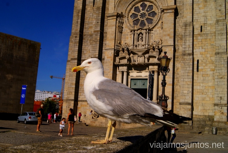 La catedral y la gaviota Visitar Oporto, Portugal Que ver y que hacer en Porto #ViajarConSuegra