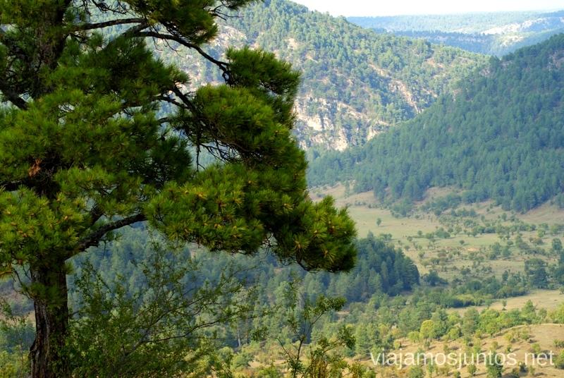 """Vistas desde el """"Balcón"""" La berrea del ciervo y la ronca del gamo en la Serranía de Cuenca, Castilla-La Mancha"""