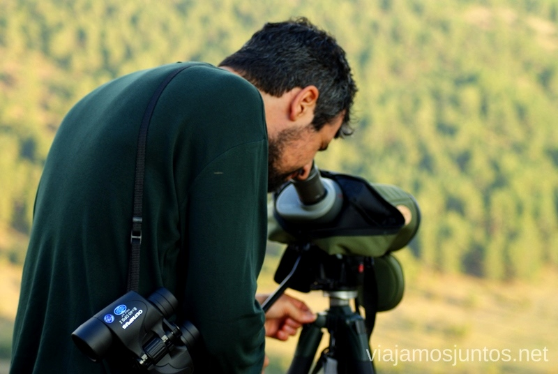 Buscando algo interesante para enseñarnos La berrea del ciervo y la ronca del gamo en la Serranía de Cuenca, Castilla-La Mancha