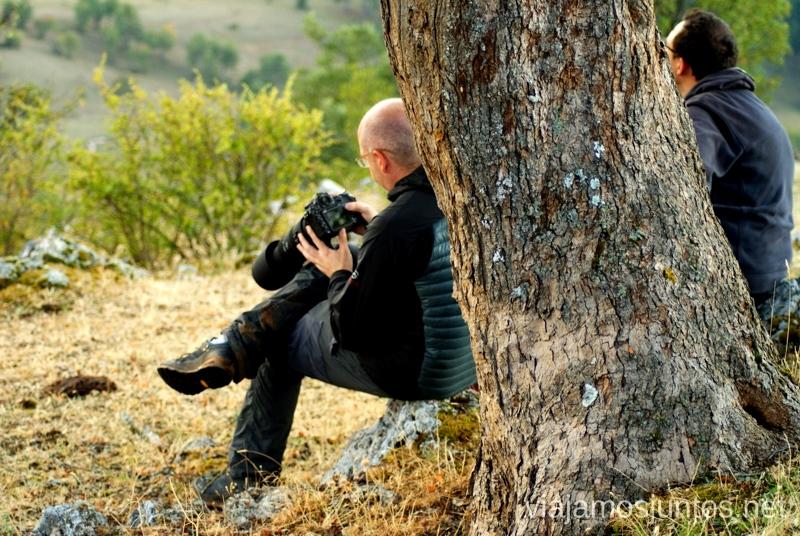Teleobjetivo siempre bienvenido La berrea del ciervo y la ronca del gamo en la Serranía de Cuenca, Castilla-La Mancha