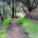 Verde y negro - la combinación que me gusta cada vez más Ruta de la Caldera de Taburiente, La Palma, Islas Canarias