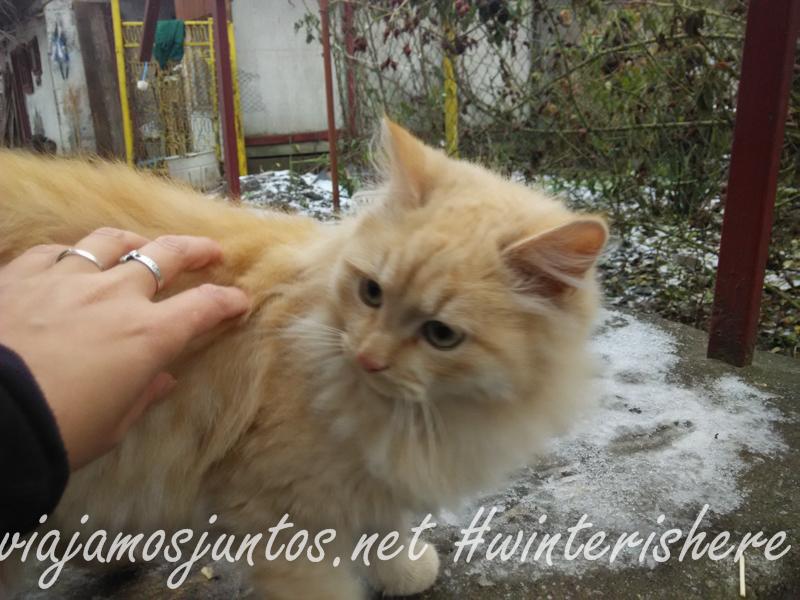 Tiempo para tranquilidad, tiempo para los gatos Celebrando año nuevo viejo en ucrania. Propósitos del Año Nuevo