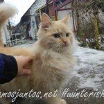 Positividad a tope con los gatitos Celebrando año nuevo viejo en ucrania. Propósitos del Año Nuevo
