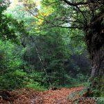 Los senderos del Cubo de la Galga Senderismo en la Palma, Ruta del Cubo de la Galga #LaPalmaJuntos