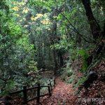 Paseando por los senderos palmeros: Cubo de la Galga, laurisilva canaria Senderismo en la Palma, Ruta del Cubo de la Galga #LaPalmaJuntos