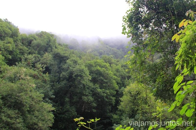 Bosque de laurisilva en la Palma Senderismo en la Palma, Ruta del Cubo de la Galga #LaPalmaJuntos