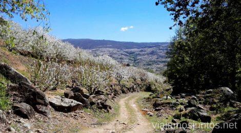 Ver cerezos en flor en el Valle del Jerte