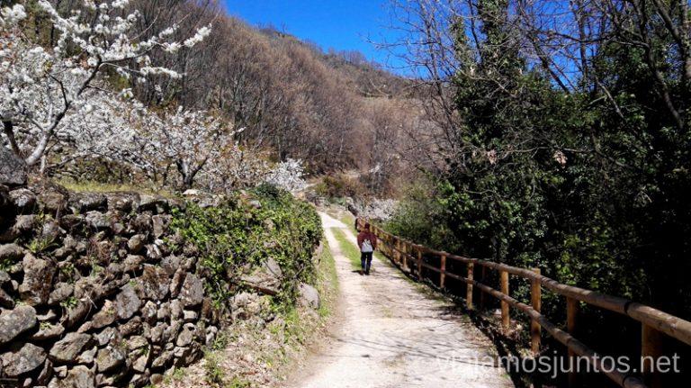 Caminar entre cerezos en flor en el Valle del Jerte Ver cerezos en flor en el Valle del Jerte Consejos prácticos, turcos, rincones secretos
