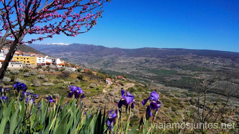 Vistas a flores, pueblos, cerezos y picos nevados desde uno de los miradores del Valle del Jerte Ver cerezos en flor en el Valle del Jerte Consejos prácticos, turcos, rincones secretos