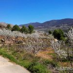 Descubriendo rincones sin masificar en el Valle del Jerte Ver cerezos en flor en el Valle del Jerte Consejos prácticos, turcos, rincones secretos