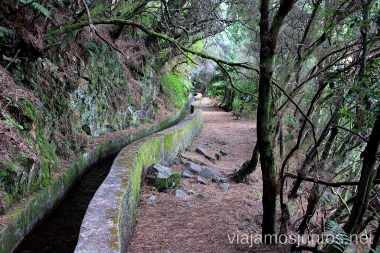 Primera parte Ruta de los Nacientes de Marcos y Cordero, la Palma, Islas Canarias