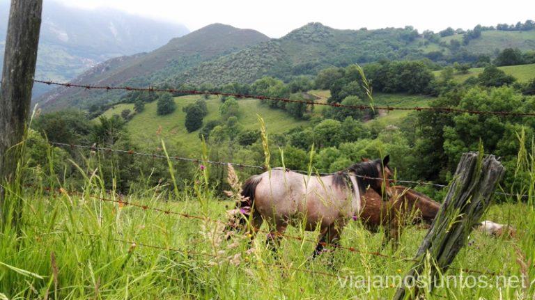 Vistas al natural Qué ver y hacer en Belmonte de Miranda, Asturias