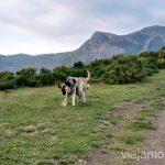 Los perros jugando en la Peral Ruta en coche por los pueblos con encanto del Parque Natural de Somiedo