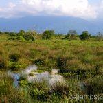 Marismas del Parque Natural de kobuleti Qué ver y hacer en la costa de mar Negro de Georgia Información práctica Batumi Kobuleti Ureki