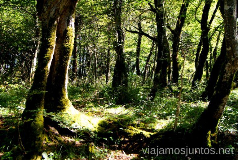 Un paseo por el centenario bosque de Colquís La Cueva de Prometeo y la Cueva Sataplia. Qué ver y hacer en Kutaisi y alrededores Georgia
