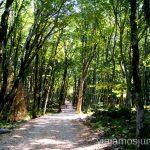 El bosque de Colquís La Cueva de Prometeo y la Cueva Sataplia. Qué ver y hacer en Kutaisi y alrededores Georgia