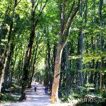 Paseos tranquilos Qué ver y hacer en Kutaisi y alrededores Georgia