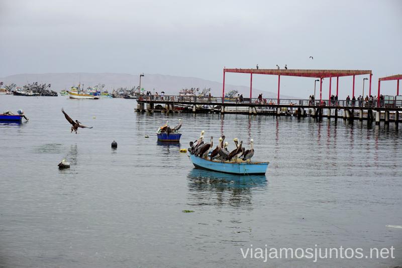 Los pelícanos mareándose en los botes Ruta por Perú de 30 días Itinerario Peru Viaje a Perú #PerúJuntos