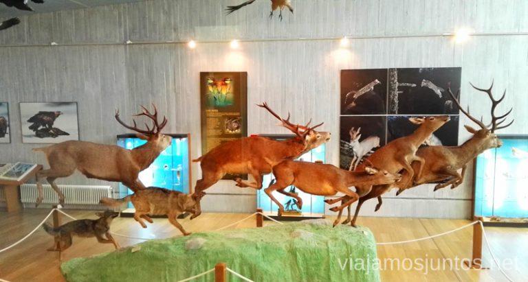 Museo de la naturaleza Valle del Alberche, El Barraco, Ávila Qué ver y qué hacer en Navaluenga, Ávila. Castilla y León