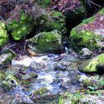 Sumidero del río Guareña Qué ver y qué hacer en las Merindades Castilla y León