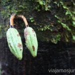Curiosidades que te encuentras paseando por la selva peruana Viajar a la selva peruana. Consejos prácticos para organizar tu viaje a la selva peruana Peru #PerúJuntos Perú
