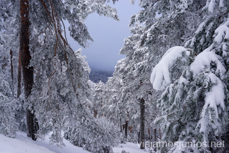 Vistas desde la ruta Camino Schmid - Calzada Roma desde Cercedilla. 3 rutas para disfrutar de la nieve cerca de Madrid