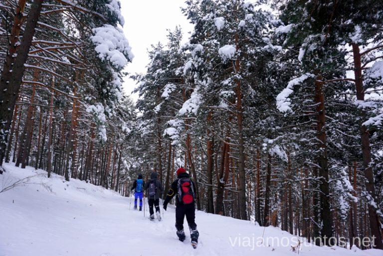 Paseando por el bosque nevado 3 rutas para disfrutar de la nieve cerca de Madrid