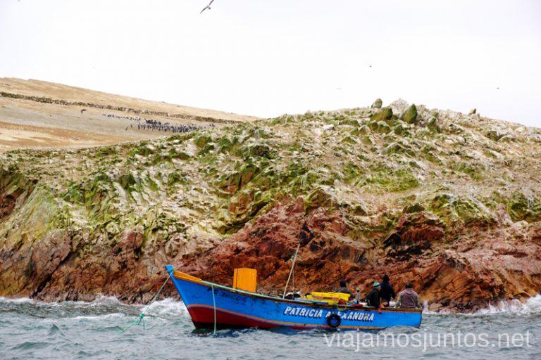 Avistamiento de aves y mamíferos en las Islas Ballestas. Qué ver y hacer en Paracas. Organizar la visita a las islas Ballestas y Reserva Nacional de Paracas Peru #PerúJuntos Perú