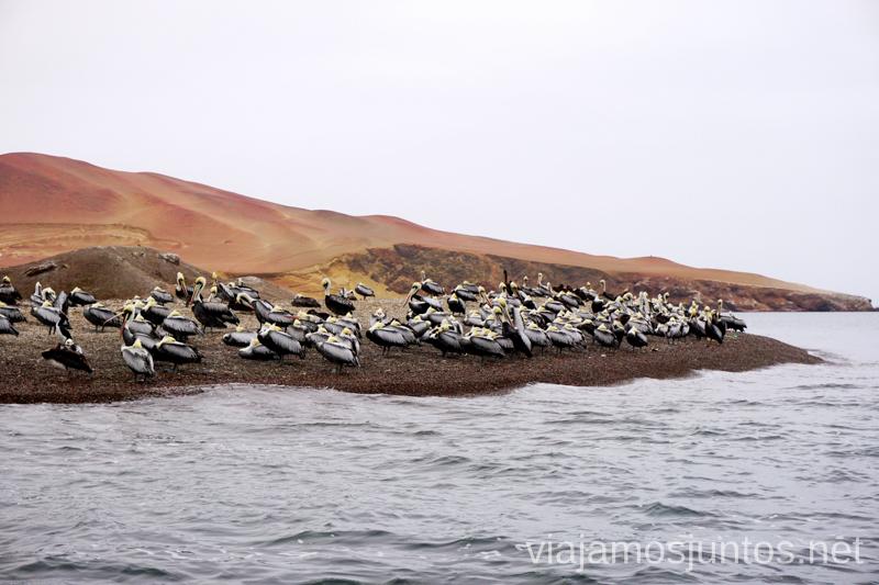 Qué ver y hacer en Paracas. Organizar la visita a las islas Ballestas y Reserva Nacional de Paracas Peru #PerúJuntos Perú