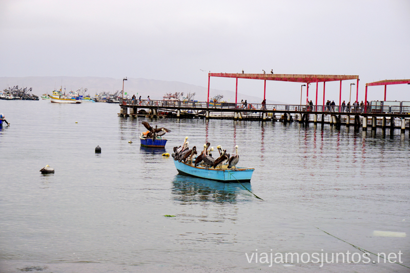 Pelícanos disfrutando en el puerto de Paracas. Qué ver y hacer en Paracas. Organizar la visita a las islas Ballestas y Reserva Nacional de Paracas Peru #PerúJuntos Perú