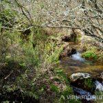 Haciendo senderismo en la Sierra Norte de Madrid. GR303. Que hacer en la Sierra Norte de Madrid Rutas de Senderismo