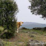 Conociendo la Sierra Norte de Madrid. Que hacer en la Sierra Norte de Madrid Rutas de Senderismo