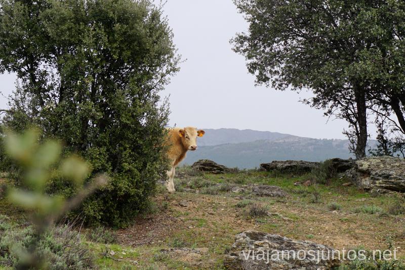 Visitas imprescindibles en la Sierra Norte de Madrid