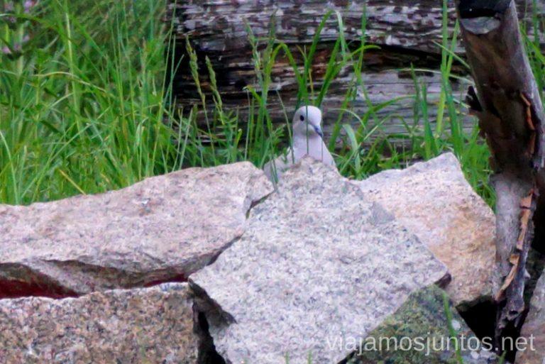 Avistamiento de aves en la Sierra Norte de Gredos. Qué hacer en Gredos Norte, la Sierra Norte de Gredos. Dónde dormir y dónde comer