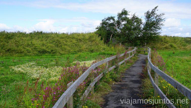 Wexford Wildfowl Reserve. Qué ver y hacer en Irlanda #IrlandaJuntos Ireland's Ancient East