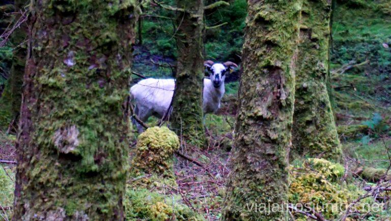 Unicornios en bosques encantados de Irlanda. Qué ver y hacer en Southern Peninsulas Irlanda #IrlandaJuntos