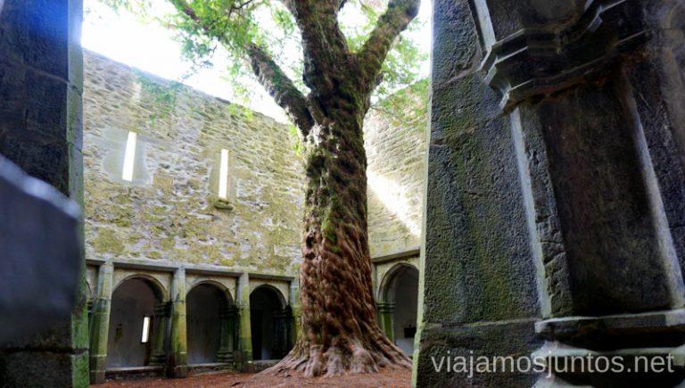 Abadía Muckross. Qué ver y hacer en Southern Peninsulas Irlanda #IrlandaJuntos