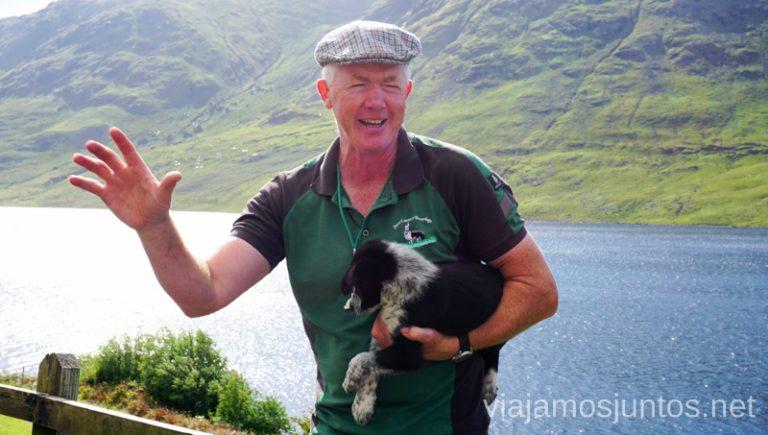 Joyce Country Sheepdogs - si quieres ver cómo trabajan los perros-pastores en Irlanda. Joyce Country Sheepdogs. Perros - pastores de Irlanda. Wild Atlantic Way Irlanda #IrlandaJuntos