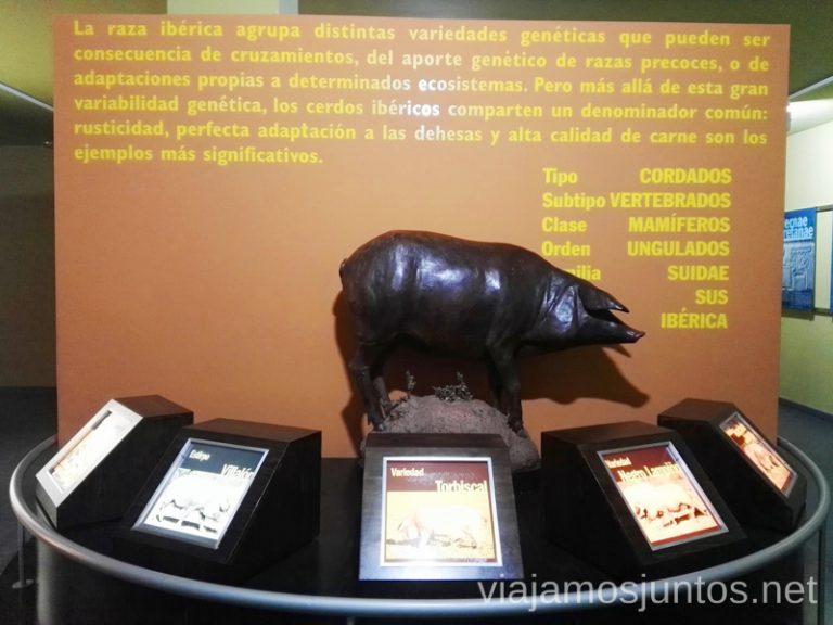 Museo del Jamón de Aracena. Qué ver y hacer en Aracena Provincia de Huelva Andalucía España