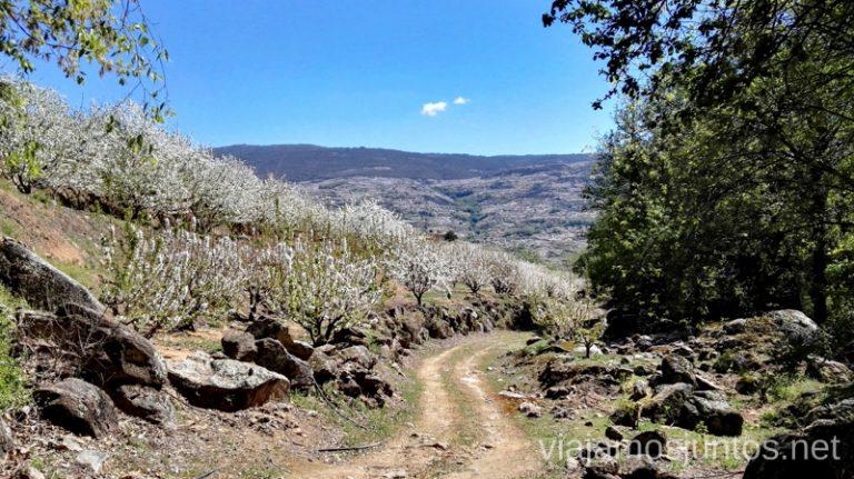 Sendas del Valle del Jerte. Ver cerezos en flor en el Valle del Jerte Consejos prácticos, turcos, rincones secretos