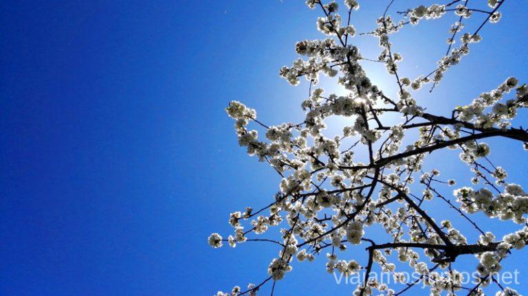 Cerezos en flor en el valle del Jerte. Ver cerezos en flor en el Valle del Jerte Consejos prácticos, turcos, rincones secretos