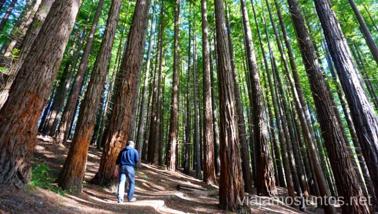 Monte Cabezón Bosque de Secuoyas Qué ver y hacer en los alrededores de la Costa Quebrada Cantabria Spain