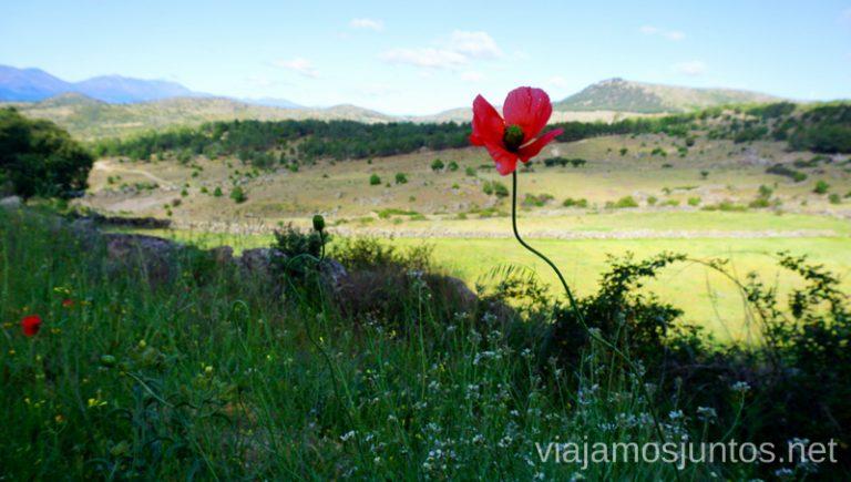 Ruta guiada por Barraco. OrnitoCyL Qué ver y qué hacer en OrnitoCyL, Ávila. Castilla y León