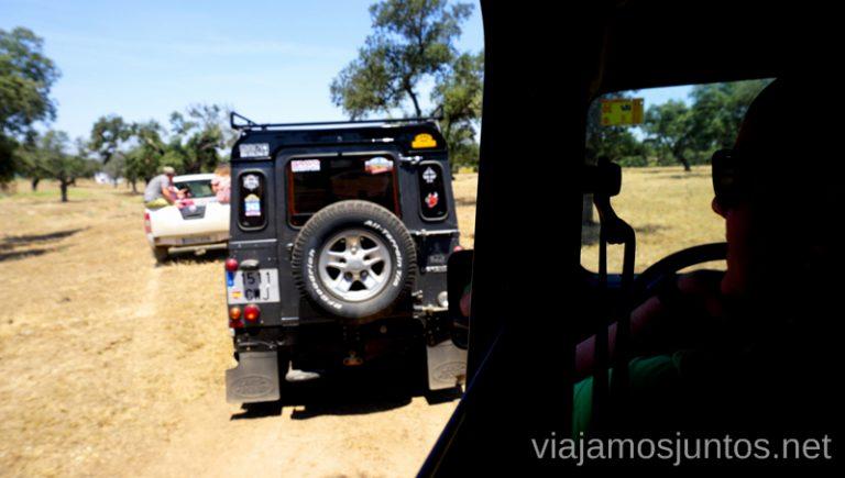 Safari de ganado bravo. Qué ver y hacer en el lago Alqueva #Experiencias_Alqeuva Extremadura Portugal