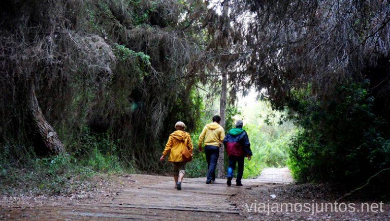Caminos por el Parque natural de la Albufera. Qué ver y hacer en Cullera y alrededores en verano Valencia