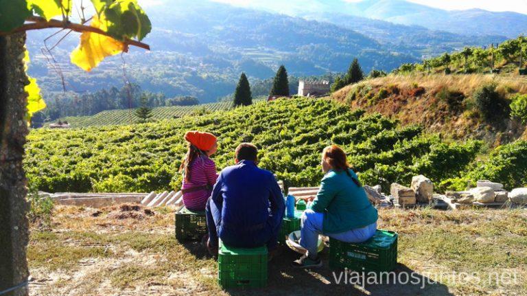 Vendimiar es disfrutar de los momentos pequeños. Galicia. #VendimiaJuntos