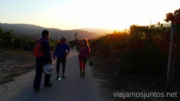 Vendimiar en buena compañía en Galicia. Sensaciones y nuestra experiencia. #VendimiaJuntos