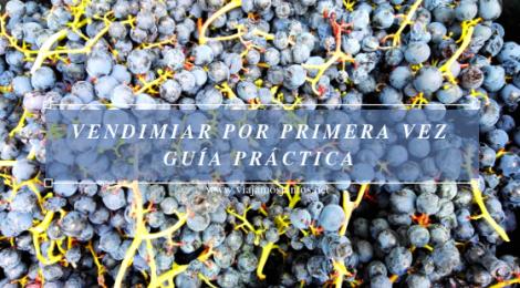 Vendimiar por primera vez. Guía práctica. Galicia.
